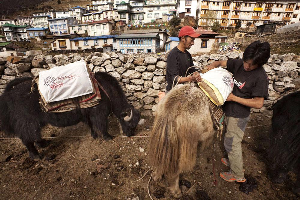 Reportage | Losan Piatti - Fotografo Toscana_Everest_Caravan Yak_02