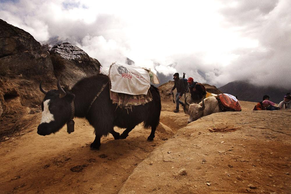 Reportage | Losan Piatti - Fotografo Toscana_Everest_Caravan Yak_03