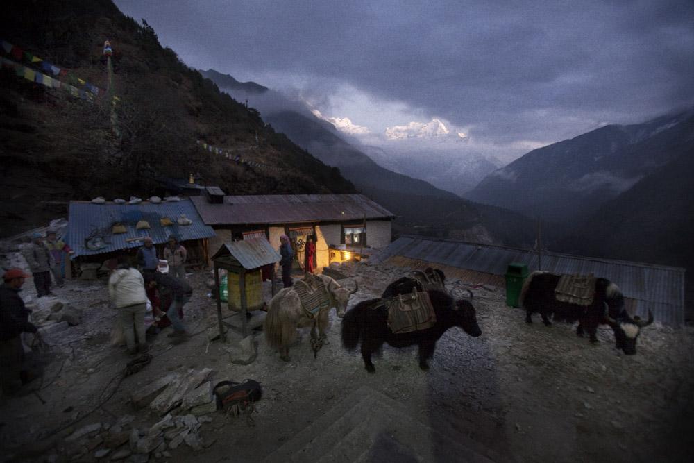 Reportage | Losan Piatti - Fotografo Toscana_Everest_Caravan Yak_05