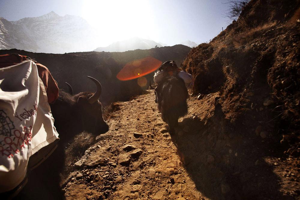 Reportage | Losan Piatti - Fotografo Toscana_Everest_Caravan Yak_08