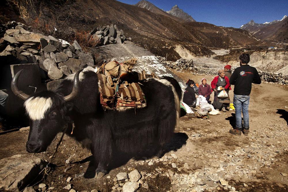 Reportage | Losan Piatti - Fotografo Toscana_Everest_Caravan Yak_18