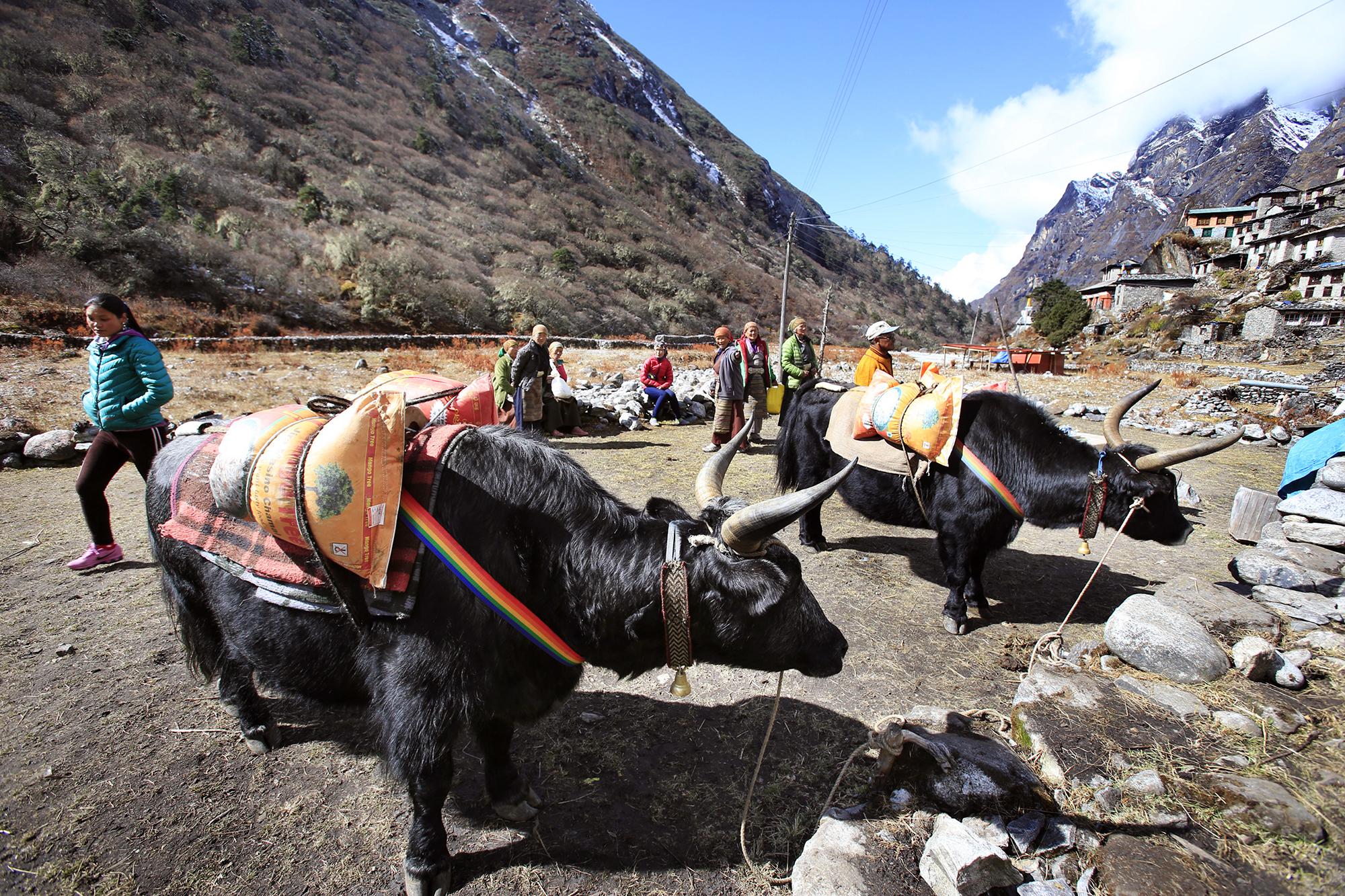 Reportage | Losan Piatti - Fotografo Italia_Nepal 2015_Mount Everest School_Mensa